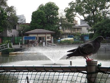 噴水と鳩ポッポ