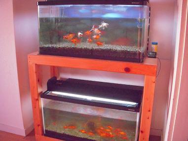 ダブル金魚水槽