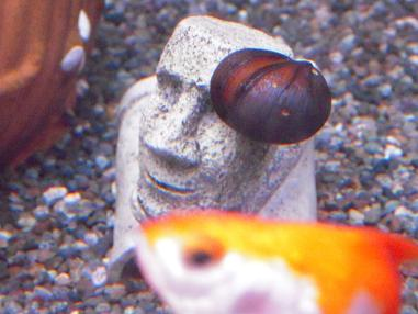 モアイと貝と金魚さん