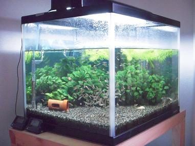 60cmワイド熱帯魚水槽