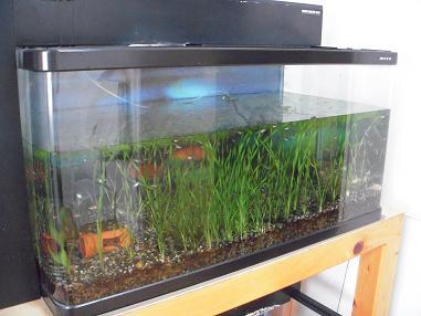 90cm熱帯魚水槽