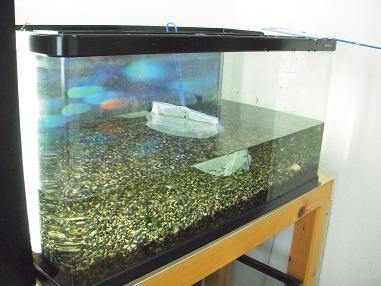 熱帯魚の移動