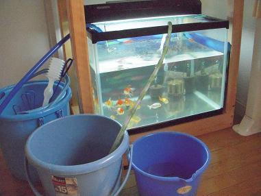 金魚水槽水換え中