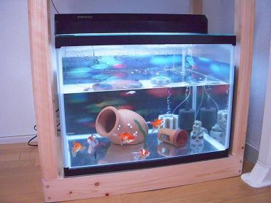60cmワイド金魚水槽
