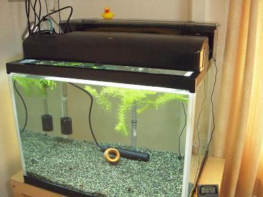 60cmワイド水槽