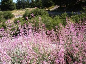きれいな高原の花