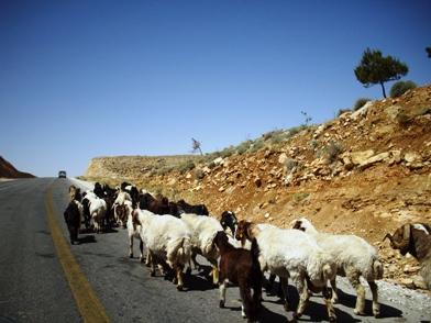 道路の羊ちゃん