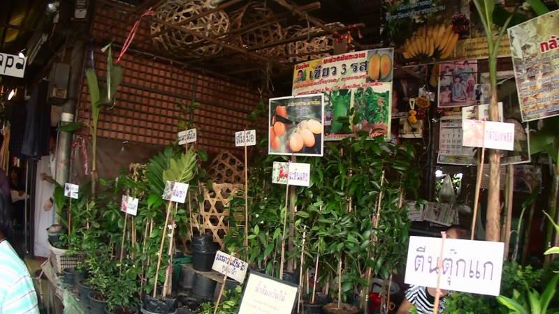 4-25-177 植木