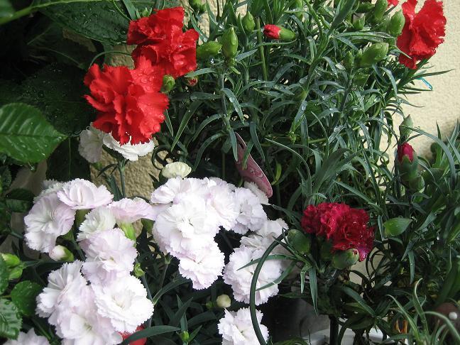 3年分の母の日の花.JPG