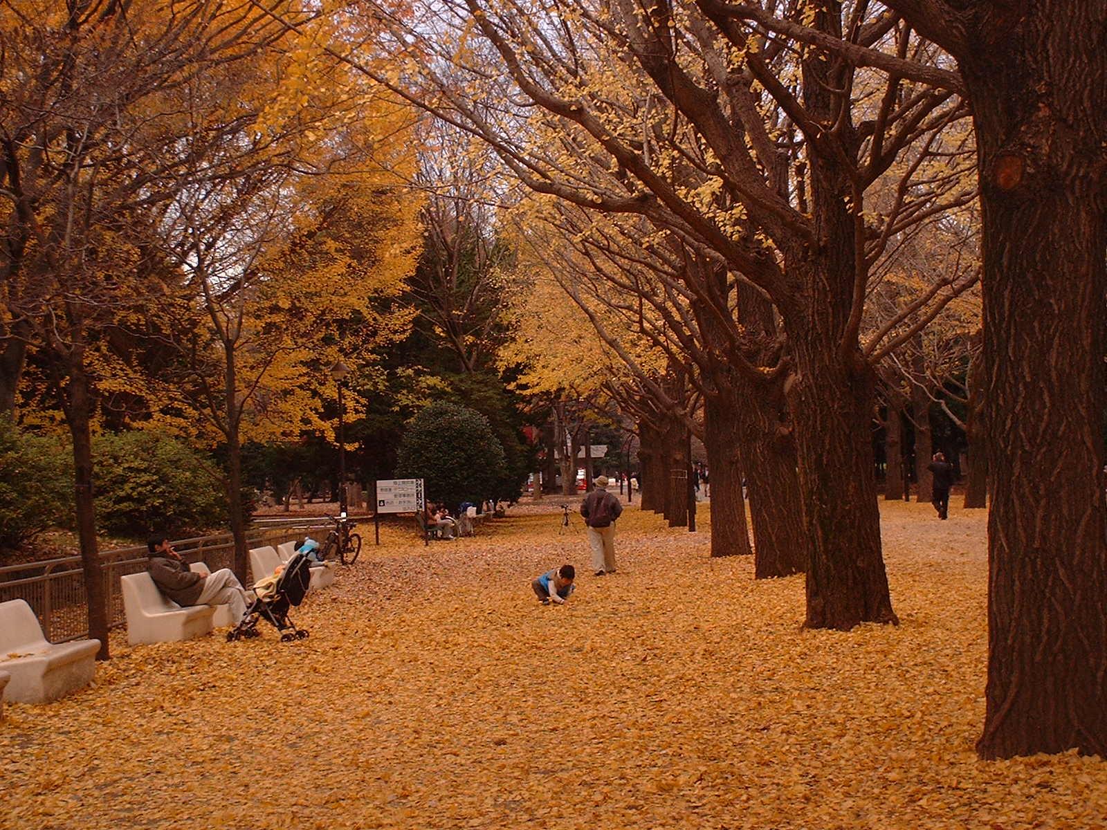 光が丘公園の銀杏の落ち葉のじゅうたん