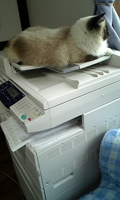 ジジ、faxの上