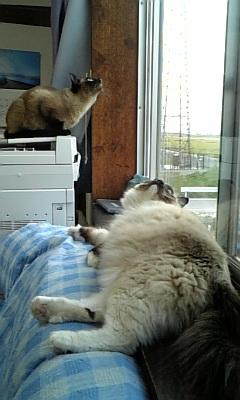 猫2匹、上見てる