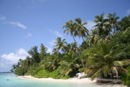 MALDIVES2007 206.jpg
