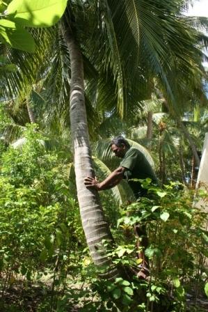 MALDIVES2007 276.jpg