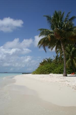 MALDIVES2007 266.jpg