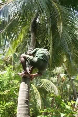 MALDIVES2007 277.j