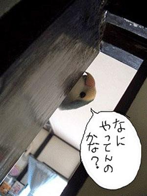 だいすきなちぇりー3.jpg