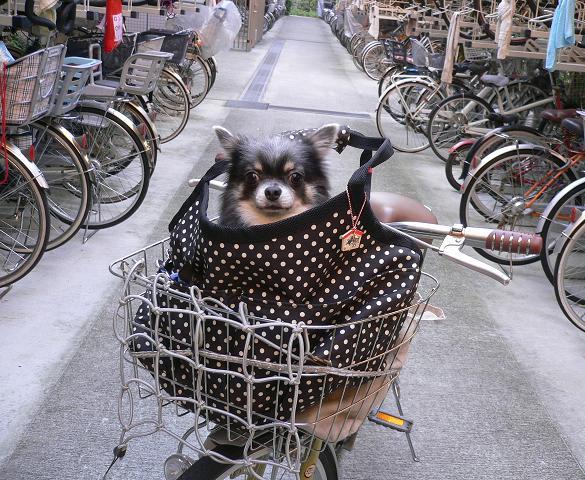 自転車に乗っていきます