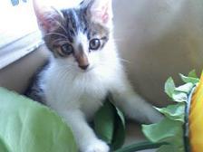 猫さん 09-08-24