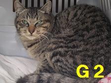 手術 掲載用 G2さん