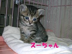 スーちゃん 09-06-05