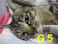 手術 掲載用 G5さん