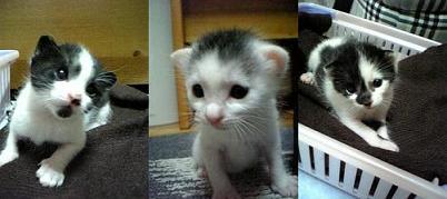 Mさん仔猫 09-10-04