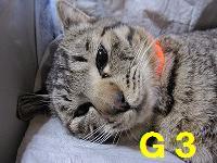 手術 掲載用 G3さん