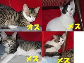 F関係 仔猫