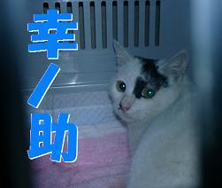 幸ノ助 08/12/05