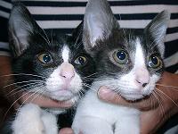 キキ&ララ