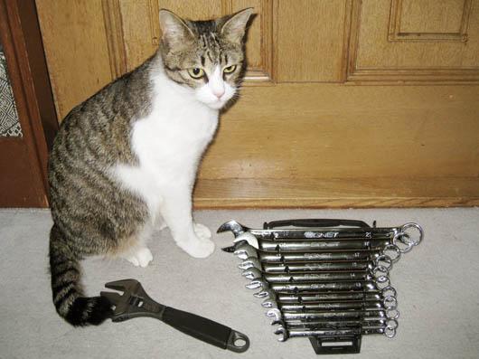 猫と工具.jpg