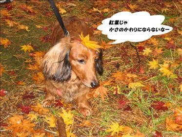 IMG_2277_t.jpg