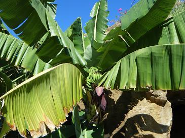 2010_0107ハワイ2010A0694.JPG