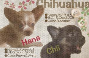hanachii_diarytitle.png