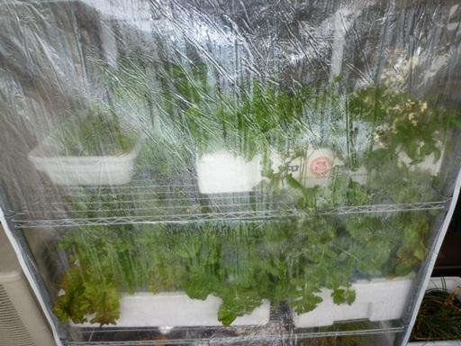 20100403温室.JPG