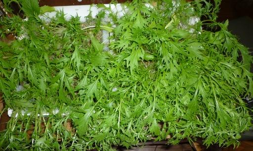 20100429水菜1.jpg