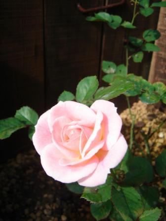 2006-0914-3