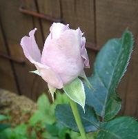 2007-0701-4