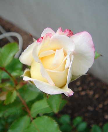 2007-0626-40