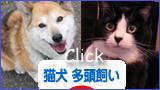 juni_nekoinu_tatou.jpg