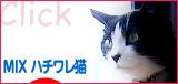 juni_hachiwareneko.jpg