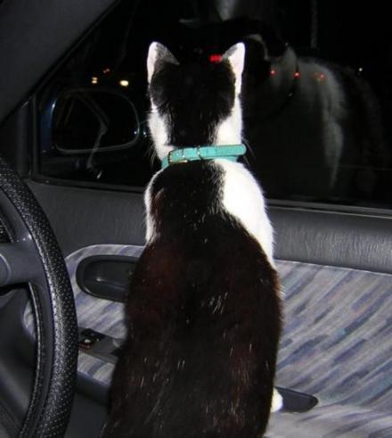 車から外を眺めるちぃくん