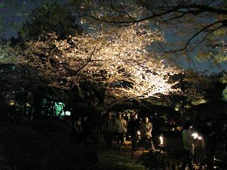 六義園_桜_ss.JPG
