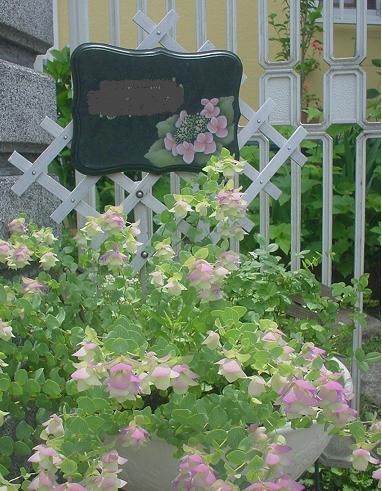 2010年6月24日 紫陽花の表札とオレガノ・ケントビューティ
