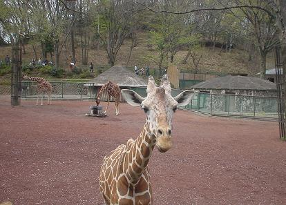 2010年4月11日 多摩動物公園にて