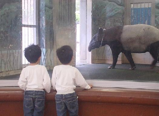 2010年4月11日 多摩動物公園にて バク