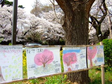 国立 桜2