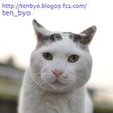 ばんひろみさん「点猫blog」