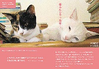 猫ふんじゃったなFREE PAPER VOL.1